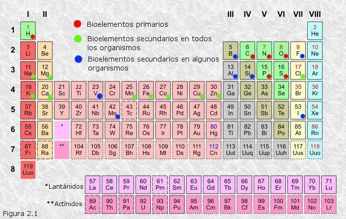 oligoelementos se encuentran en los seres vivos en una proporcin menor al 01 los oligoelementos indispensables manganesio hierro cobalto - Tabla Periodica De Los Elementos Basicos