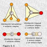 Orbitales del átomo de carbono