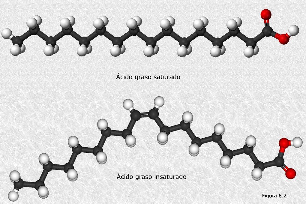 Formula General de Los Acidos Grasos Los ácidos Grasos Adopten