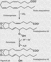 Icosanoides
