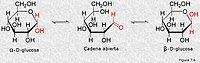 Formas anoméricas de la glucosa