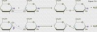 Enlace O-glicosídico