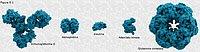Tamaño de las moléculas proteicas