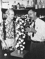Linus Pauling y Richard B. Corey