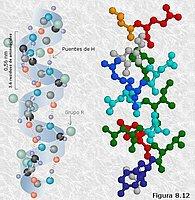 La hélice-α de las proteínas