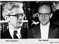 Jonh Kendrew y Max Perutz