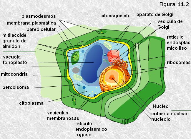 Resultado de imagen de funcionamiento de las células a niveles de genes
