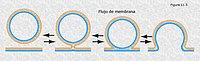 Flujo de membrana