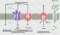Transporte a través de las membranas