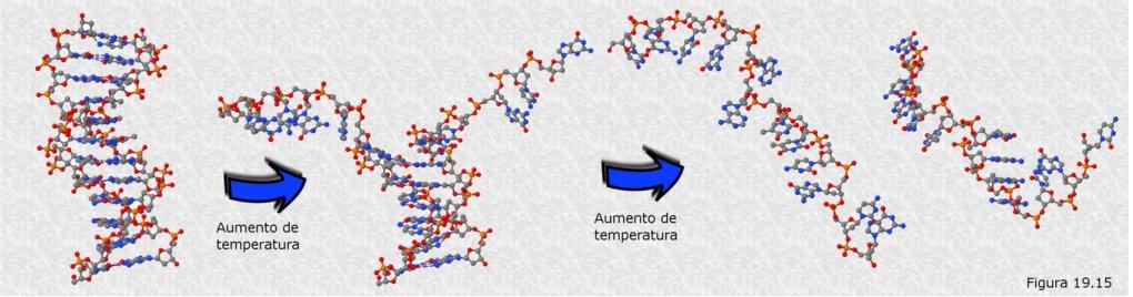 los experimentos de watson y crick en la estructura del adn