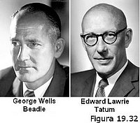 George W. Beadle y Edward L. Tatum
