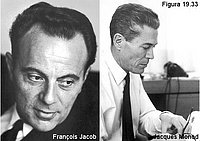 François Jacob y Jacques Monod