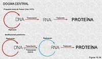 """El """"dogma central"""" del la biología molecular"""