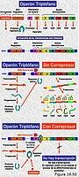 Regulación de la expresión génica. El operón Trp