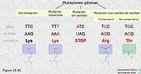La mutación a nivel molecular