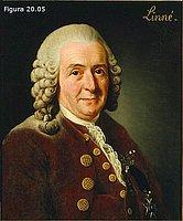 Carl von Linné (Linneo)