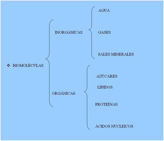 biomoleculas funciones: